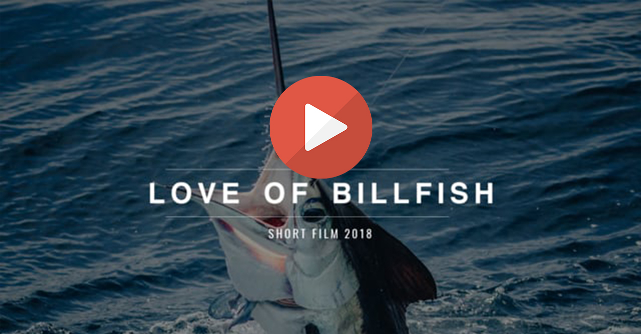 Love of billfish