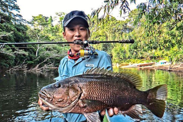 Papuan Bass