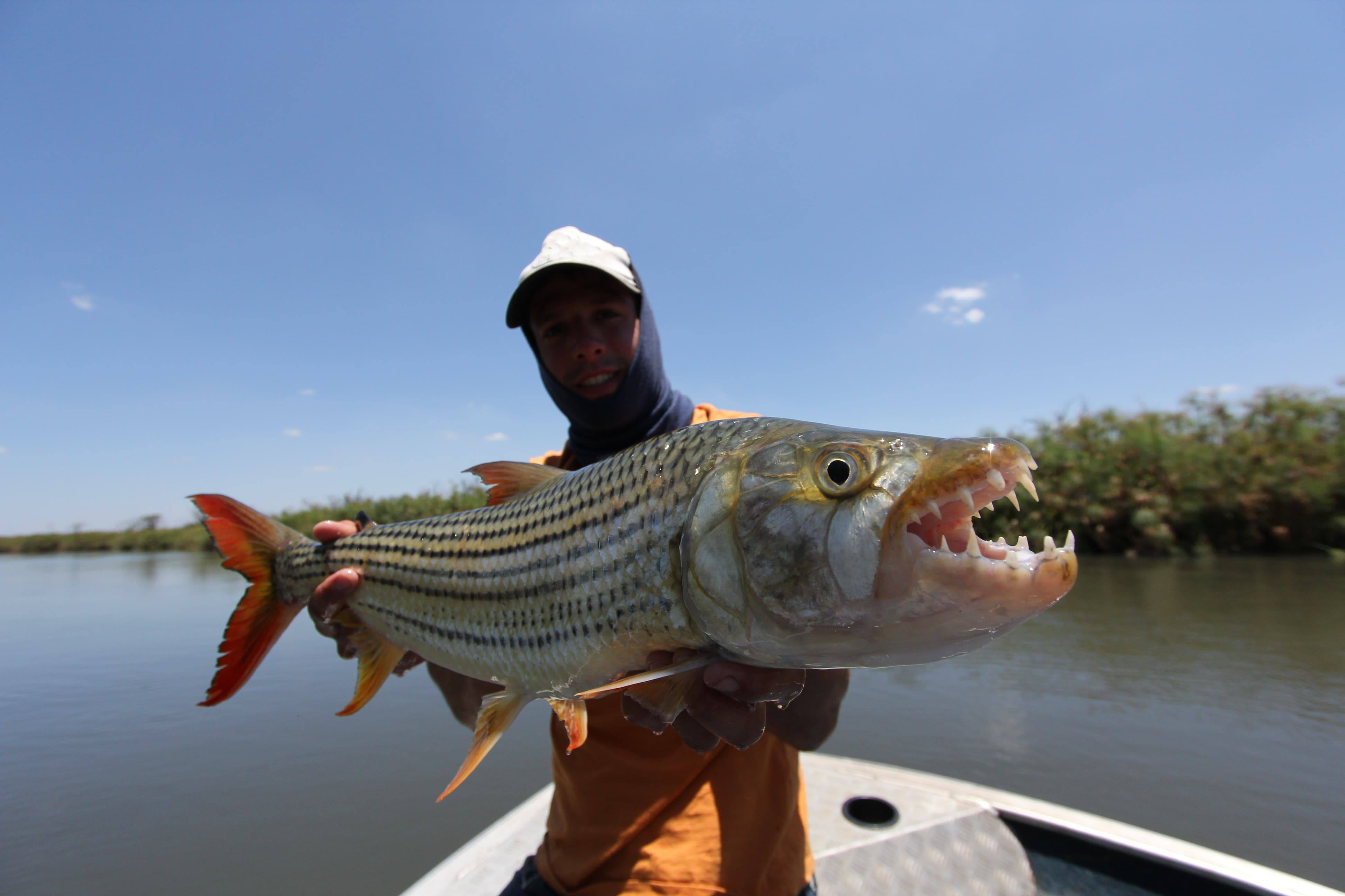 Comment pêcher le Tigerfish ?