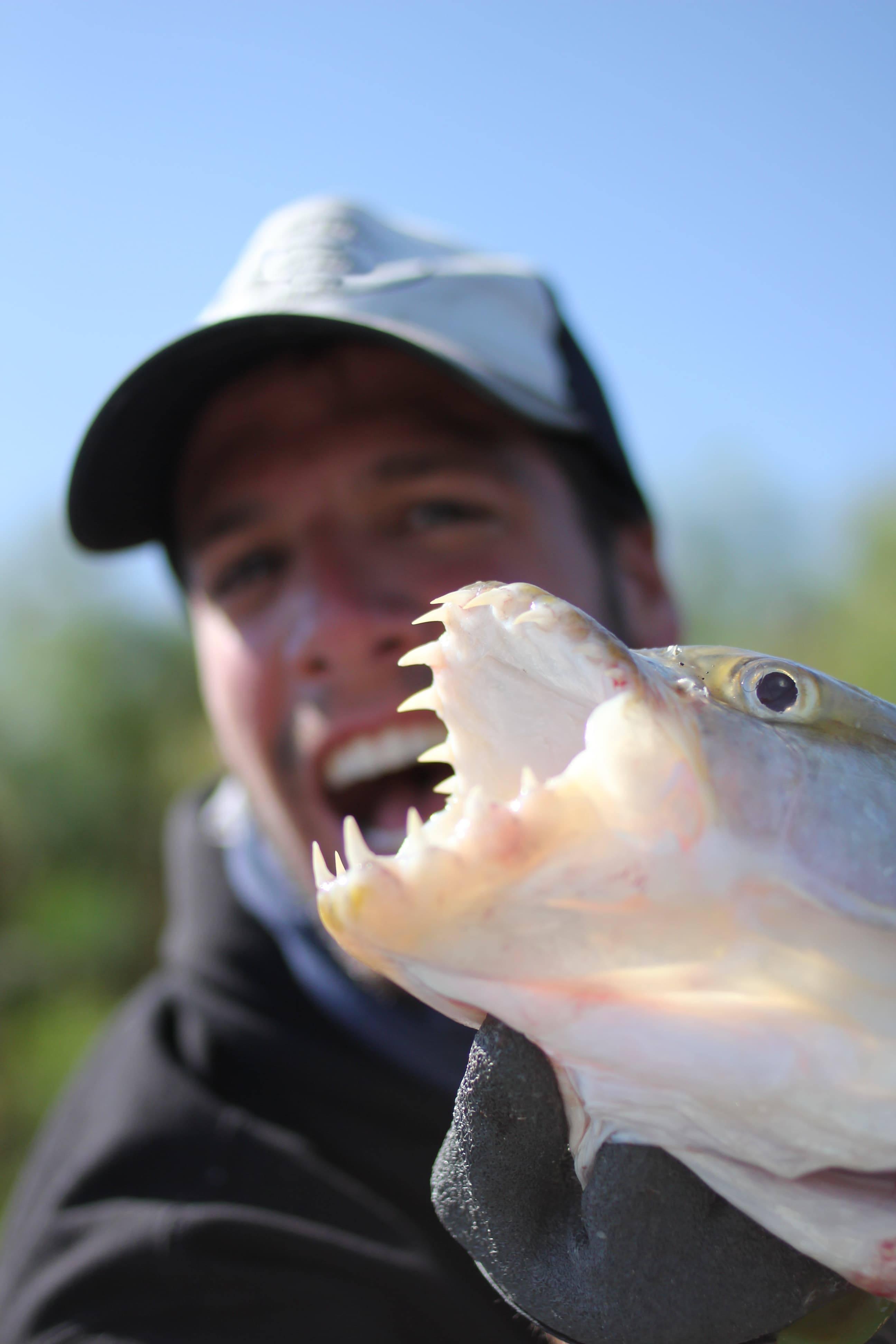 Comment pêcher le Tigerfish ?