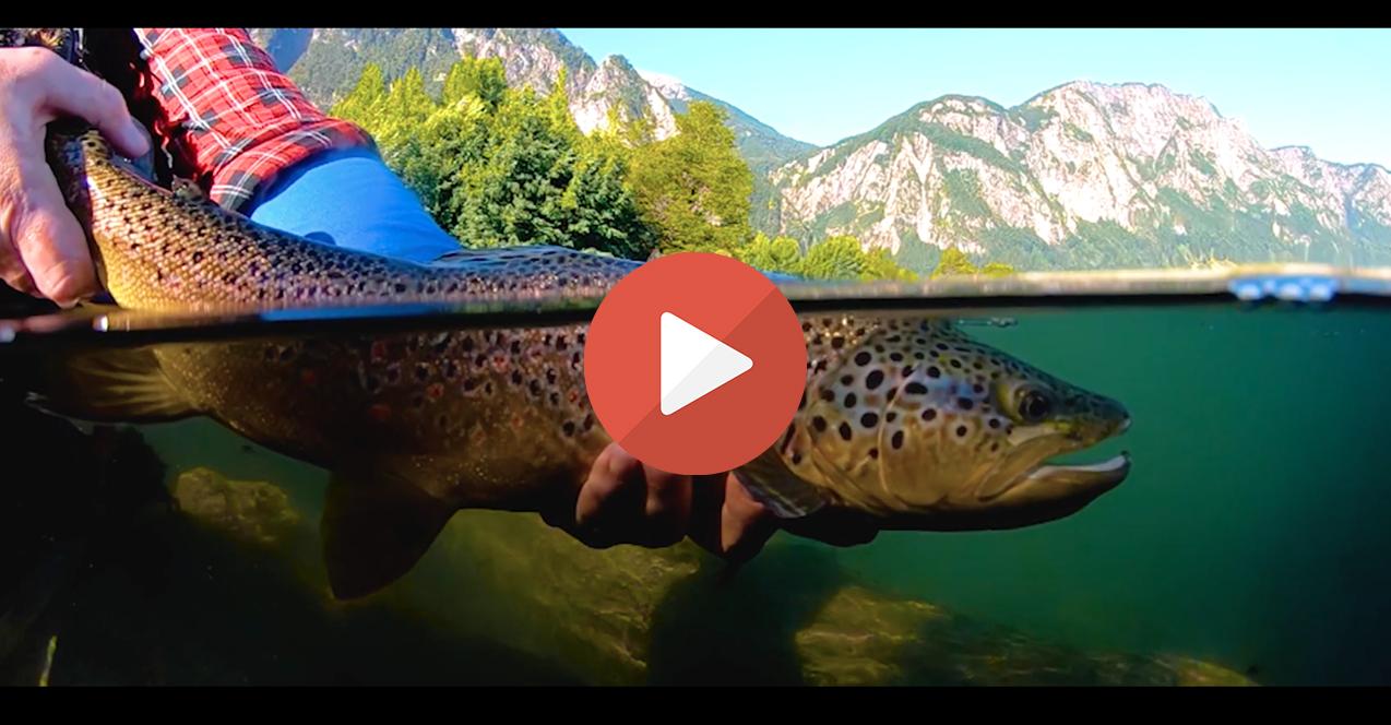 Vidéo de pêche Janvier