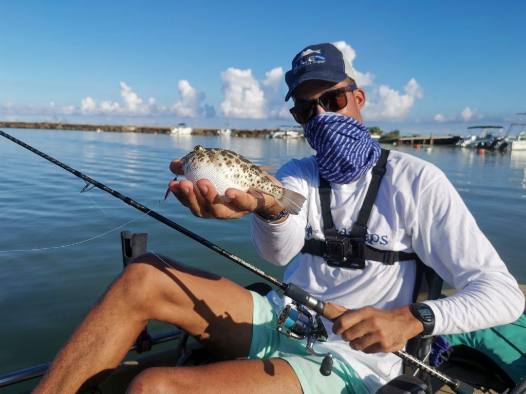 pufferfish poisson globeguadeloupe