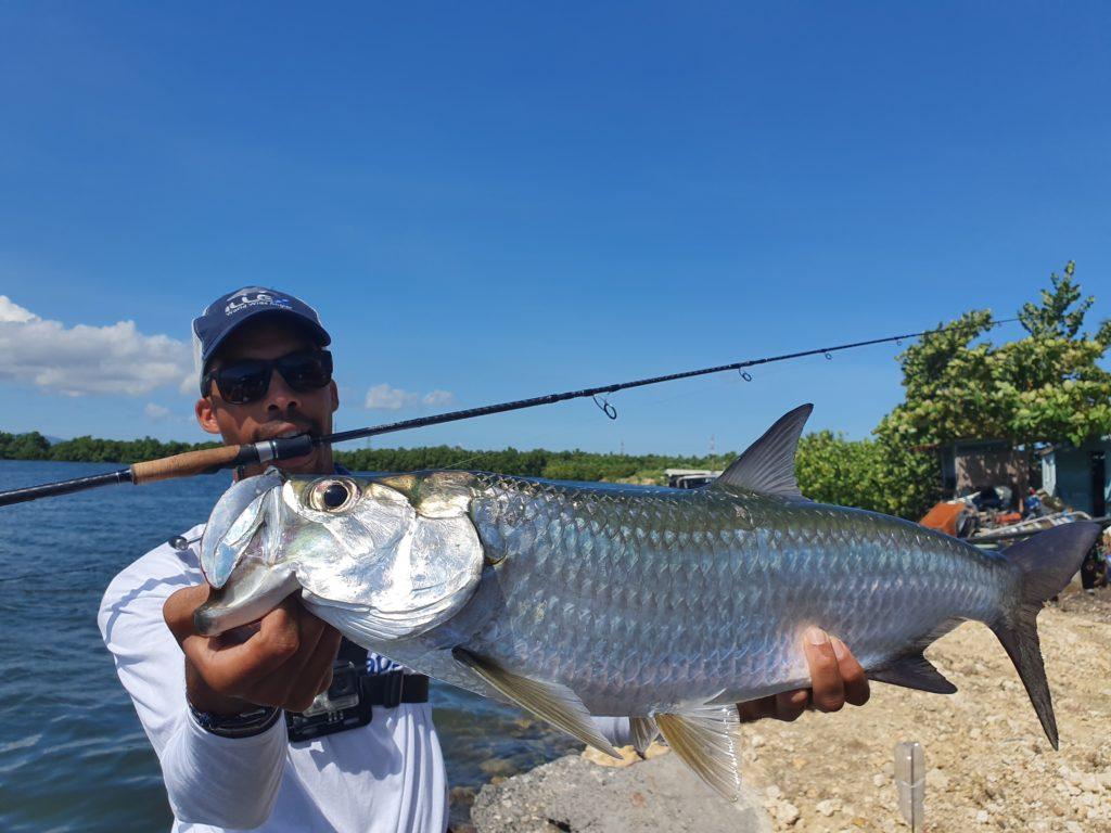 Beau tarpon de notre séjour de pêche en guadeloupe