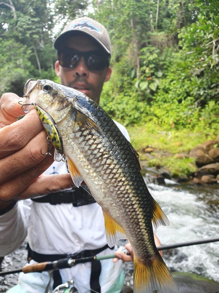 pêche en guadeloupe mulet de montagne