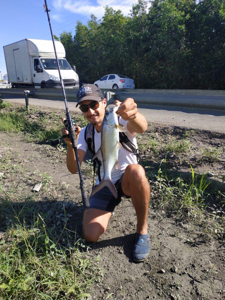 tarpon en streetfishing en guadeloupe