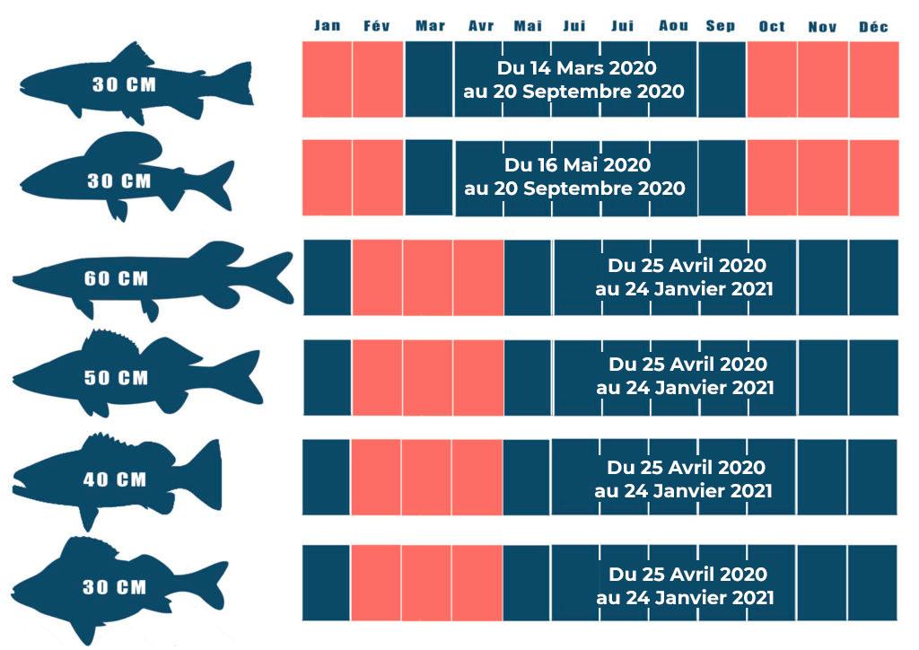 Calendrier Peche 2021 Ouverture de la pêche 2020 : toutes les dates par espèce
