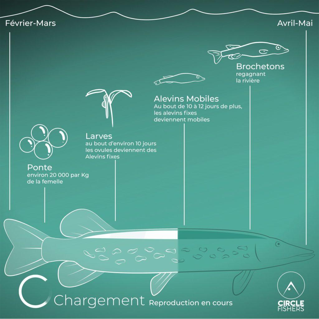 Pour une pêche eco-responsable