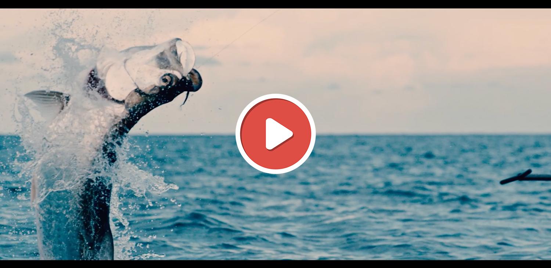 Vidéos de pêche mai 2020